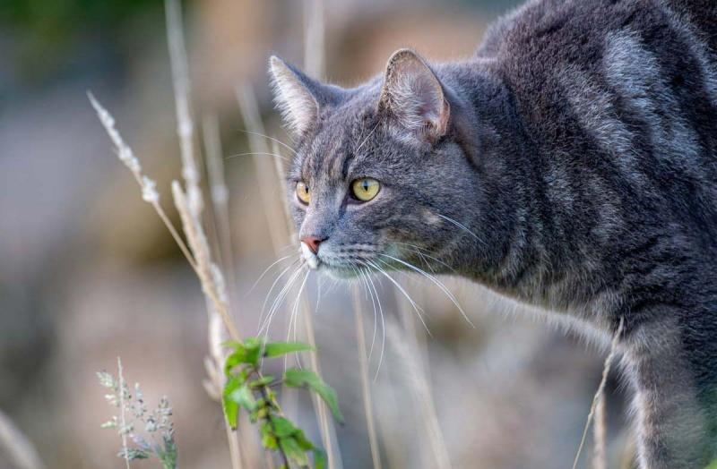 Какой рацион кормления лучше всего подходит для кошек?