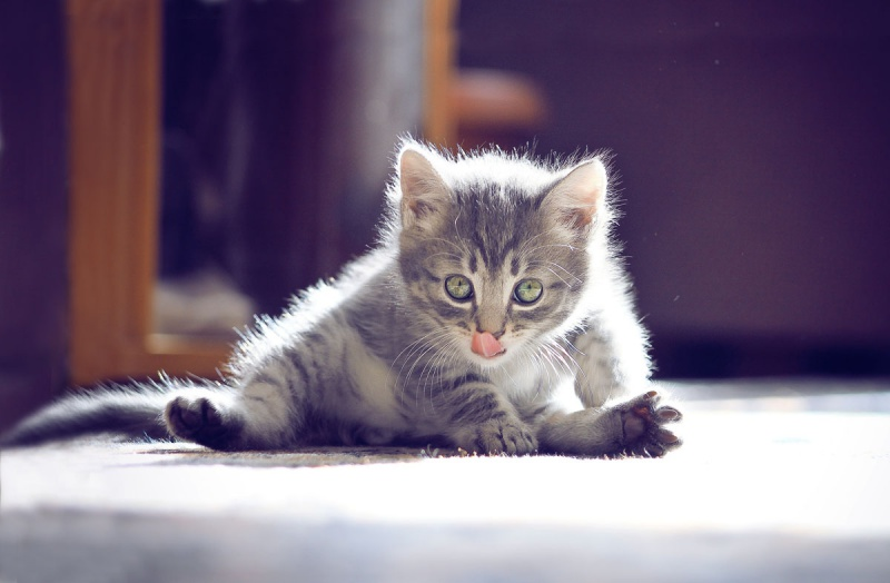 Когда котёнку можно давать сухой корм