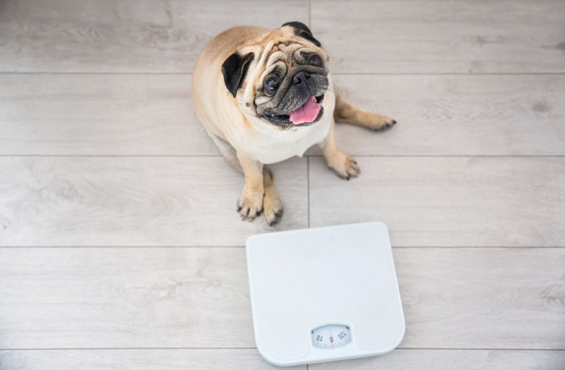 Корм для собак для коррекции веса