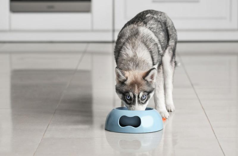Корм для собак с пониженным содержанием белка
