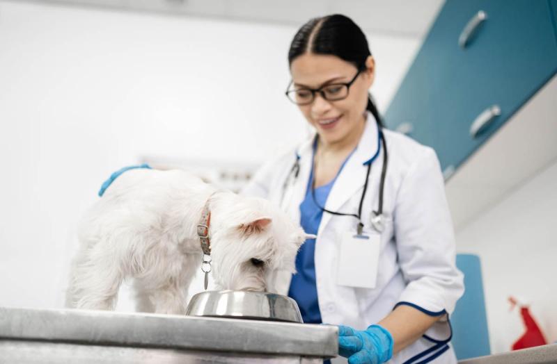 Корм для собак с высоким содержанием белка