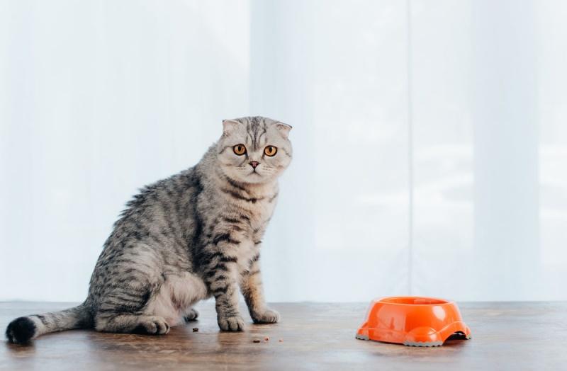 Кормление кошек натуральной пищей и сухим кормом