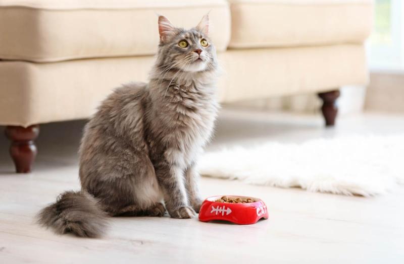 Кошка перестала есть сухой корм