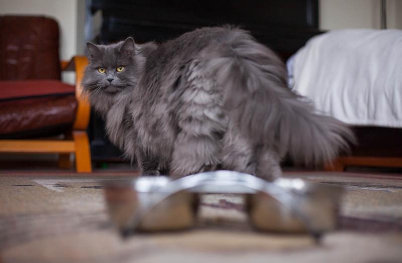 Кот перестал есть сухой корм