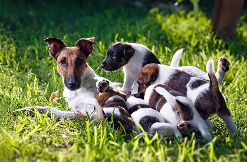 Можно кормящую собаку кормить сухим кормом
