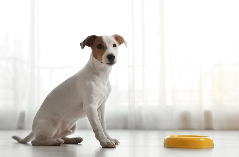 Неправильное питание собак
