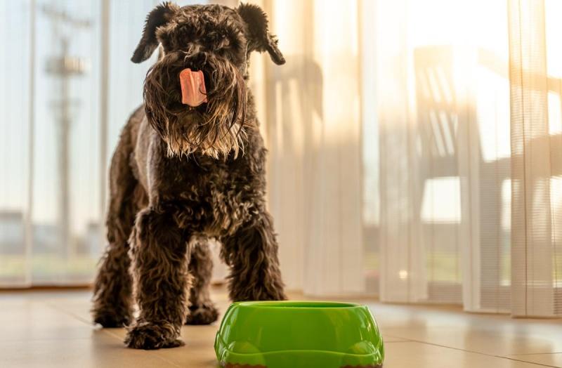 Питание собак при ожирении
