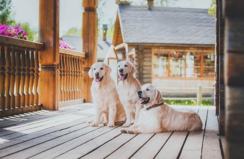 Питание собаки породы лабрадор