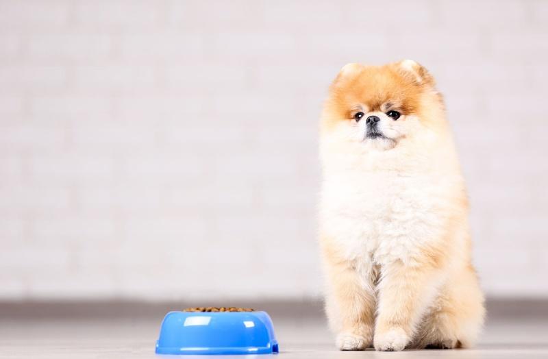 Питание собаки породы шпиц