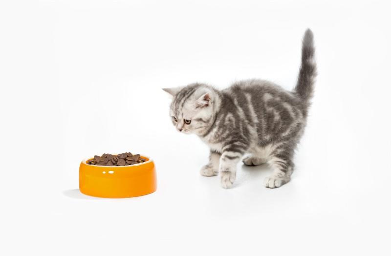 Почему котёнок не ест сухой корм