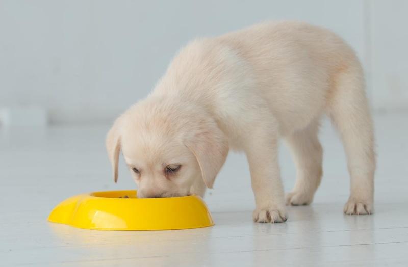 Рацион кормления щенка
