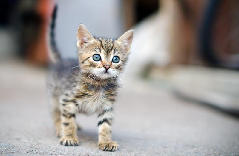 Рацион питания котенка