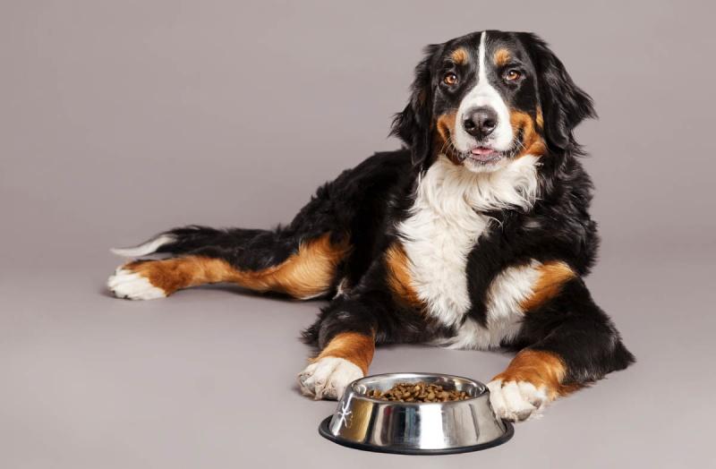 Рацион питания старых собак