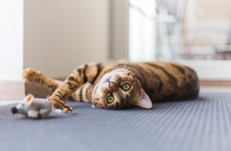 рацион кормления стерилизованной кошки