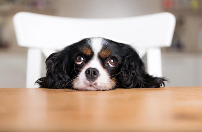 Рацион правильного питания щенка до года