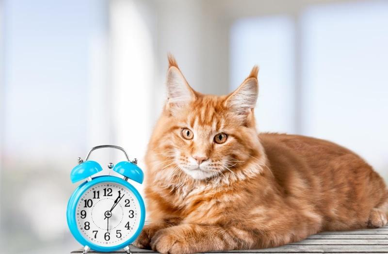 Режим питания кошек