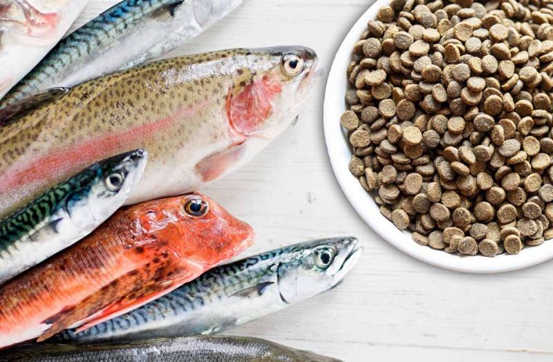 Рыба в рационе собаки
