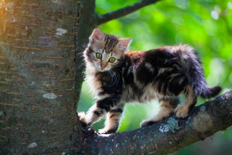 Конкурс от Аканы для владельцев кошек