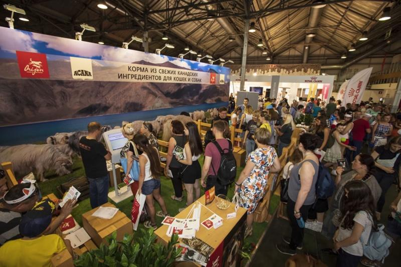Акана на фестивале Четыре лапы 2019