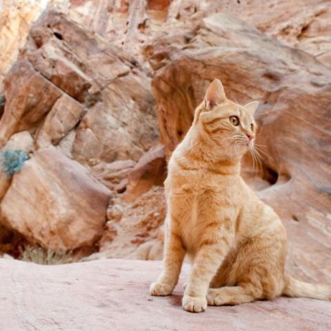 Мочекаменная болезнь у кошек и собак