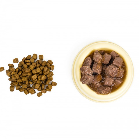 Можно ли кормить кота влажным и сухим кормом