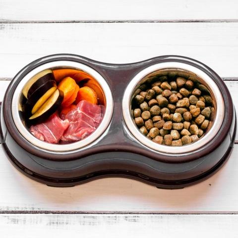 Можно ли сочетать сухой корм и натуральный