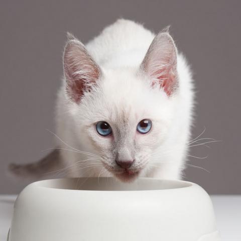 Сколько граммов сухого корма давать котёнку