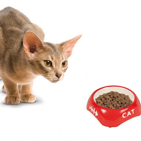 Сколько сухого корма давать коту
