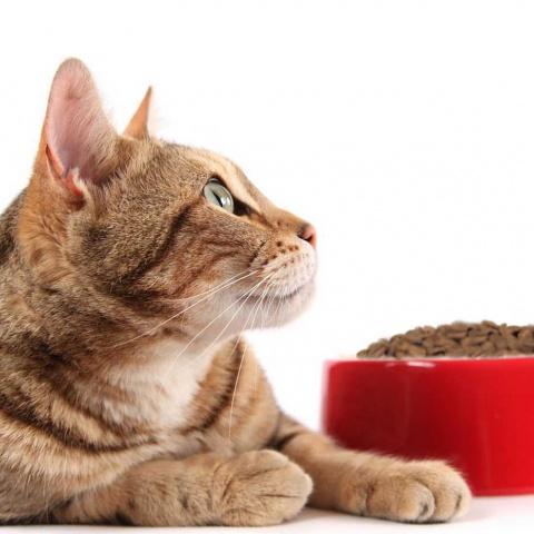 Сухой корм для профилактики МКБ у кошек