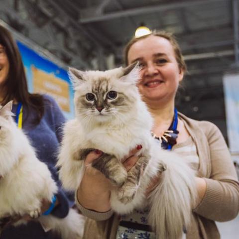Выставка кошек «Кэтсбург 2018»